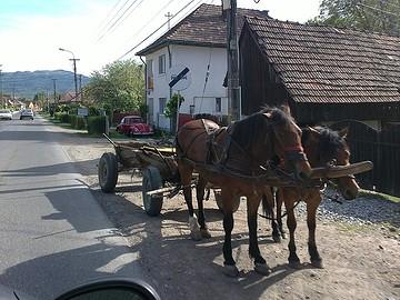 05052013368-paarden-BorderMaker
